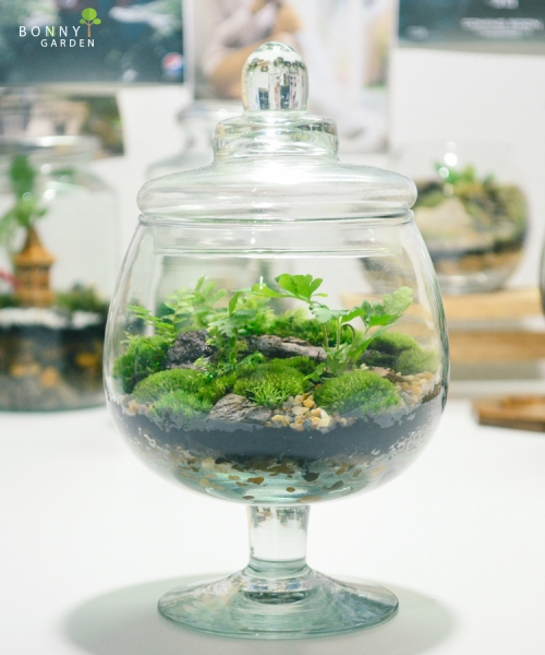 Terrarium forest BN-2 large image 0 by BonnyGarden