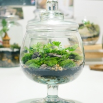 Terrarium forest BN-2 at Blisby