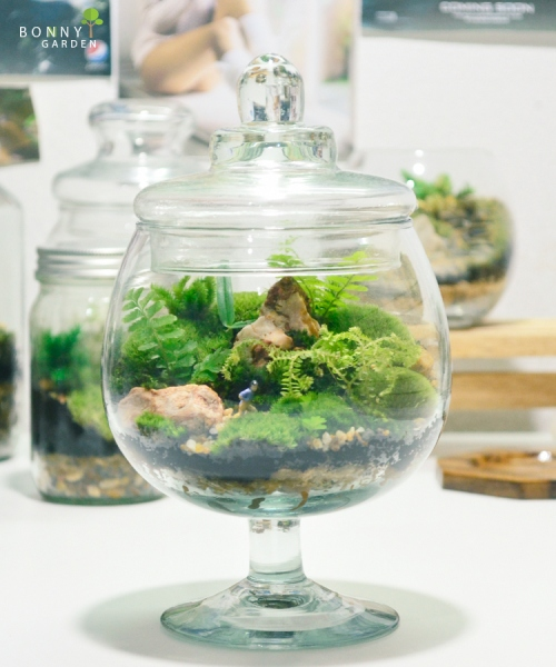 Terrarium forest BN-2 large image 1 by BonnyGarden