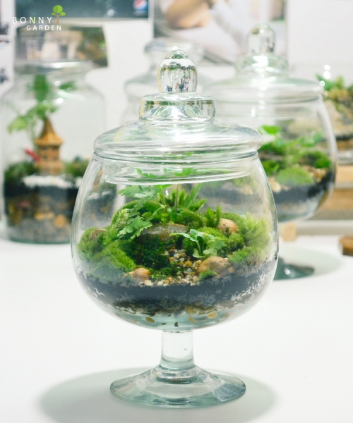 Terrarium forest BN-2 large image 2 by BonnyGarden