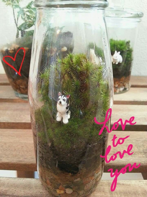 Mini Husky : Small Size Terrarium large image 0 by TinyGarden
