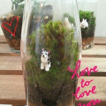 Mini Husky : Small Size Terrarium at Blisby