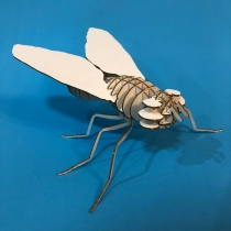 Fly 3D Puzzle  at Blisby